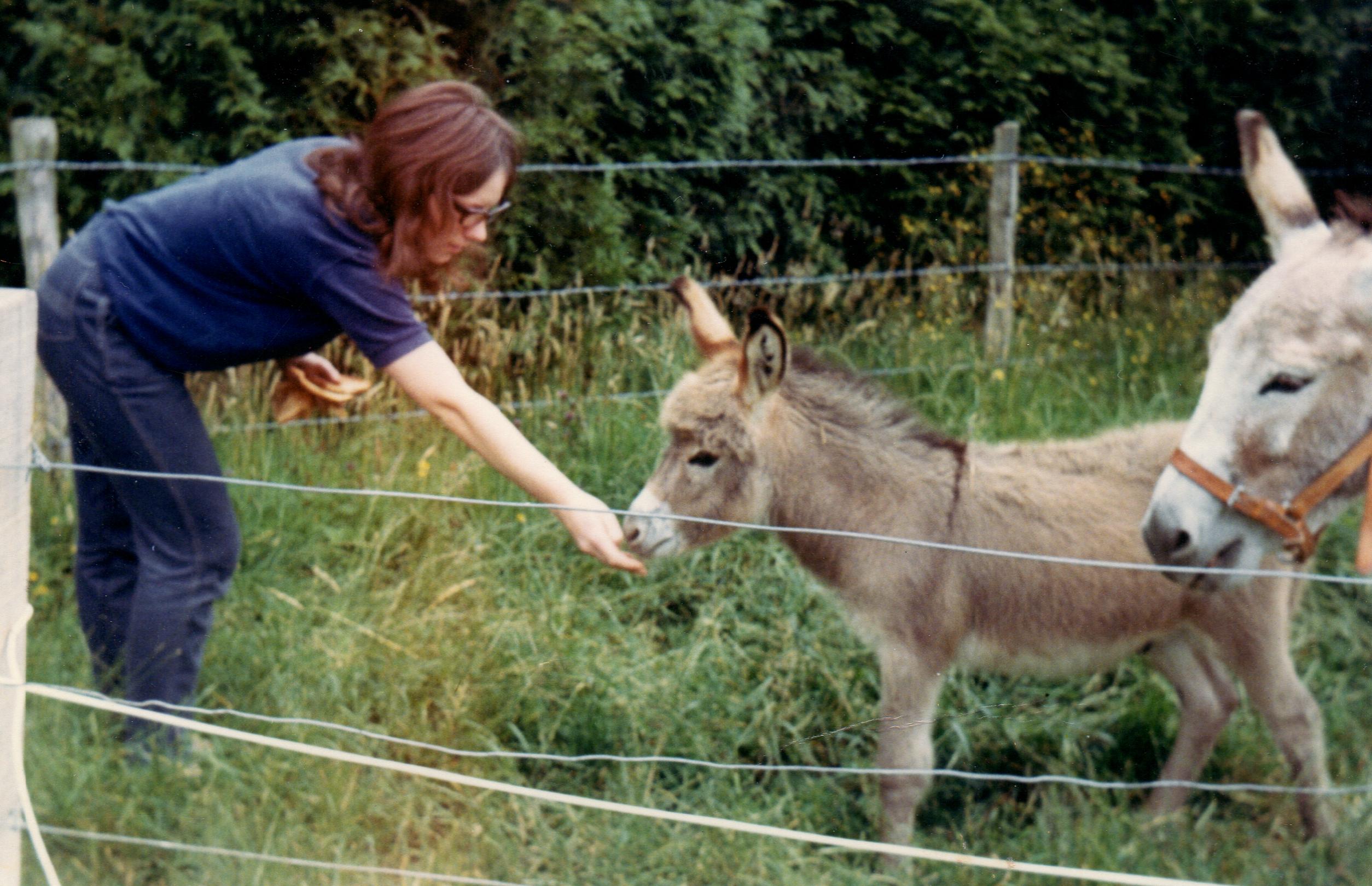 donkeys cropped